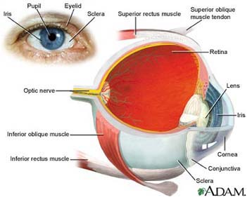 Eye Anatomy, How Eyes Work, Parts Of The Eye